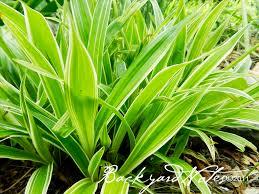 april photo a day leafy grasses backyardnotes