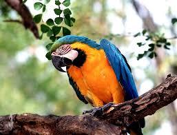 facts about parrots for kids parrot habitat u0026 diet