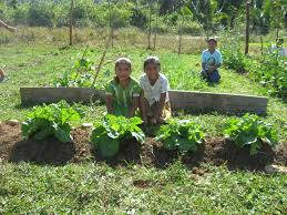 family gardening plenty belize family gardens program plenty international
