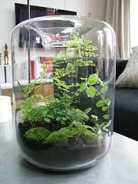 grow little paris terrariums u0026 plants pinterest terraria