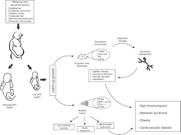 in utero fetal programming and its impact on health in adulthood