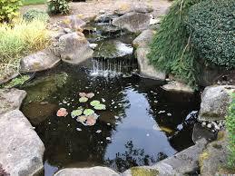 backyard aquaponics u2022 view topic watercress not growing