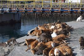 cat island cat island in japan is flooded with food donations