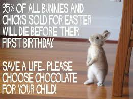 bunnies for easter an easter psa save the bunnies the rebel