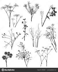 sketches of the wild herbal plants u2014 stock photo mubaister gmail