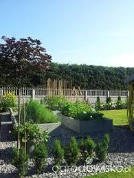 maddies garden forum ogrodnicze ogrodowisko ogród warzywny