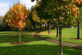 tree removal regulations the city of tualatin oregon official