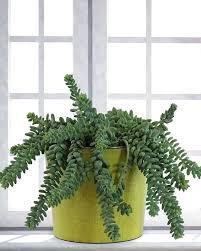 indoors garden indoor fern garden ilikeball club