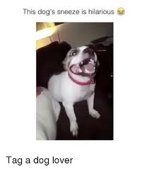 Dog Lover Meme - 25 best memes about dog lovers dog lovers memes