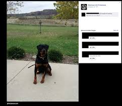 belgian shepherd vs rottweiler 2014 dog bite fatality 7 year old boy killed by trained