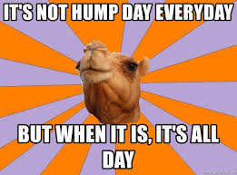 Hump Day Camel Meme - it s not hump day everyday but when it is it s all day foul