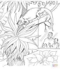 chameleon zoo coloring free printable coloring pages