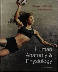 Pearson Anatomy And Physiology Lab Manual Human Anatomy And Physiology Marieb Th Edi Guide Human Anatomy And