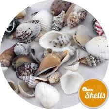 where to buy seashells assorted small shells 10 30mm mix 2 online shells buy sea