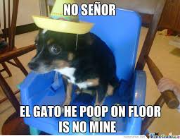 Funny Chihuahua Memes - chihuahua memes best collection of funny chihuahua pictures