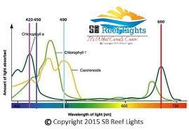 sb reef lights review sbomb sb reef lights