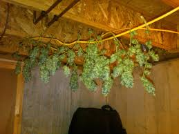 Light Cycle For Weed Flowering Light Cycle For Marijuana The Weed Scene