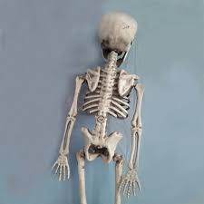 taos halloween plastic full body skeleton decoration model haunted