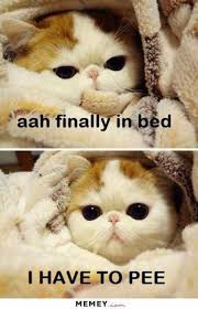 Animal In Bed Meme - dopl3r com memes aah finally in bed i have to pee memey com