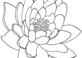 lotus flower line drawing lotus flower line drawing clipart