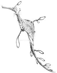 weedy sea dragon sketch by odontocete on deviantart