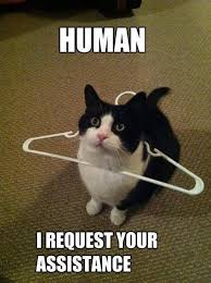 Animal Meme - request your assistance funny animal meme