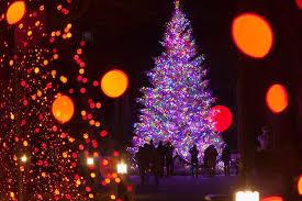 hopeland gardens christmas lights a longwood christmas frugal lancaster