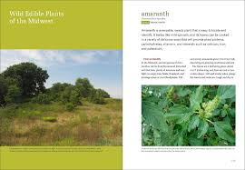 trees are also native plants midwest foraging 115 wild and flavorful edibles from burdock to