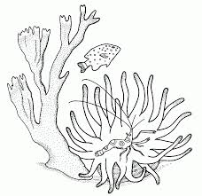 coral coloring pages and printable coloring templates u2013 barriee