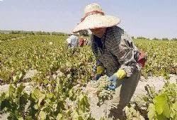 uatre nueva escala salarial para los trabajadores agrarios uatre nueva escala salarial para los trabajadores agrarios