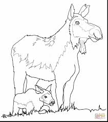 fantastic cow and calf coloring pages with moose coloring pages