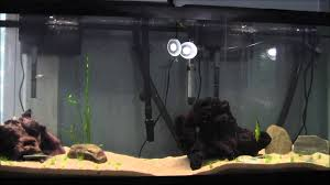 t5 aquarium light fixture coralife t5 freshwater dual light fixture mini review youtube