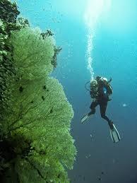 ssi open water manual study guide answers padi pros europe page 64 of 77 padi pros europe page 64