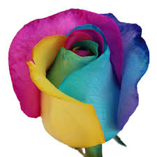 Multicolor Roses Multicolor Roses Wholesale Bulk Flowers Fiftyflowers