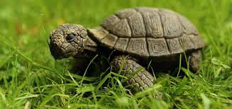 tortoise is not dead it was never alive in the place