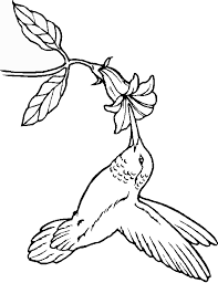 hummingbird flower coloring pages coloringstar