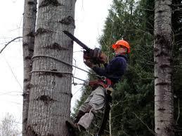 tree services in portland oregon treekeeper tree service