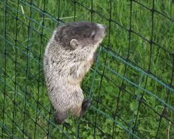 garden netting prevent pests animals and birds