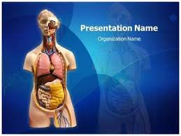 powerpoint design lungs anatomy ppt templates free download human lungs medical powerpoint