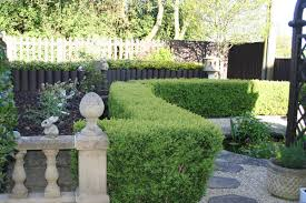 native hedging plants uk hedging and screening chew valley trees