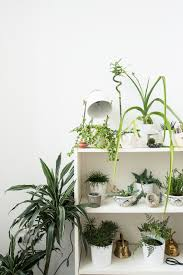 Best Inside Plants The Best Ways To Display Indoor Plants The Private Life Of A