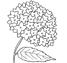 beautiful flower coloring drawing free wallpaper anggela