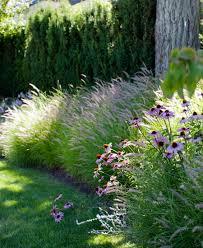 residential landscape design vancouver echinacea purpurea and