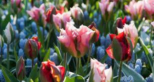 cura giardino prendersi cura dei bulbi in giardino bakker