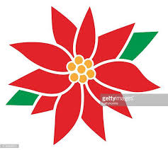 Pointsettia Poinsettia Stock Illustrations And Cartoons Getty Images