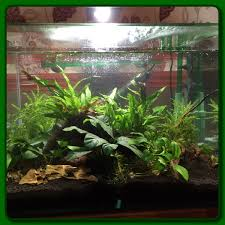 Aquascape Filter Aquascape Criptic Thoughts