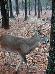 ups and downs of tree stands for deer