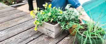 Soil Mix For Container Gardening - ecoscraps using ecoscraps organic potting mix in container gardening