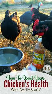 42 best backyard chickens images on pinterest