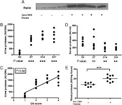 urine proteome scans uncover total urinary protease prostaglandin